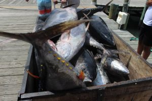 A wheelbarrow of tuna on the boardwalk