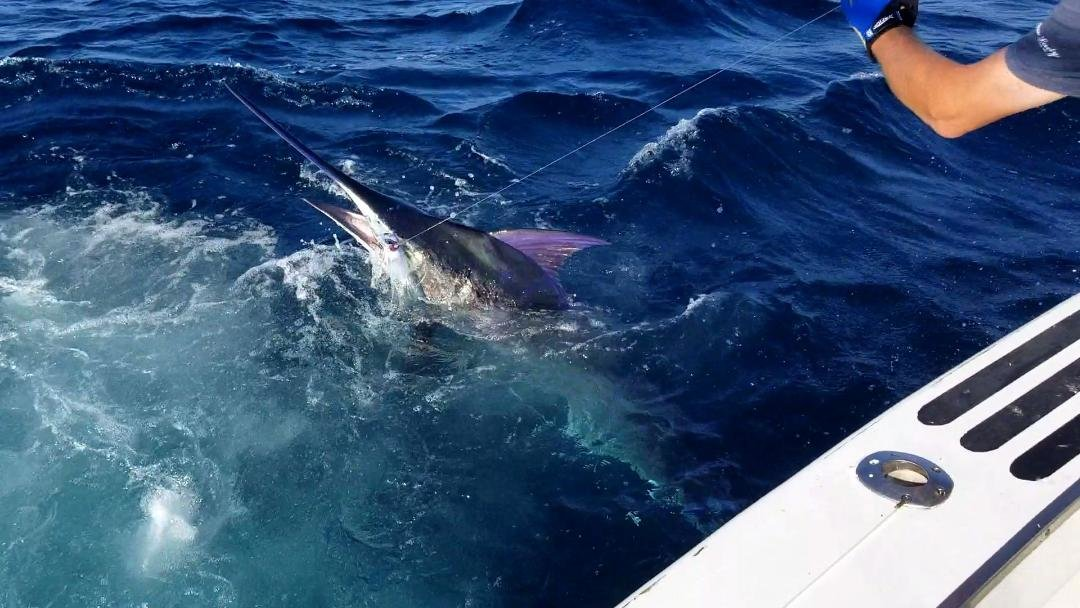 Yellowfin Tuna/ Blue Marlin/ Mahi/ BITE IS NOW / 7-10-19   Fishing